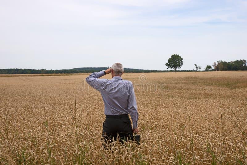 Бизнесмен исследует в пшеничном поле стоковое изображение rf