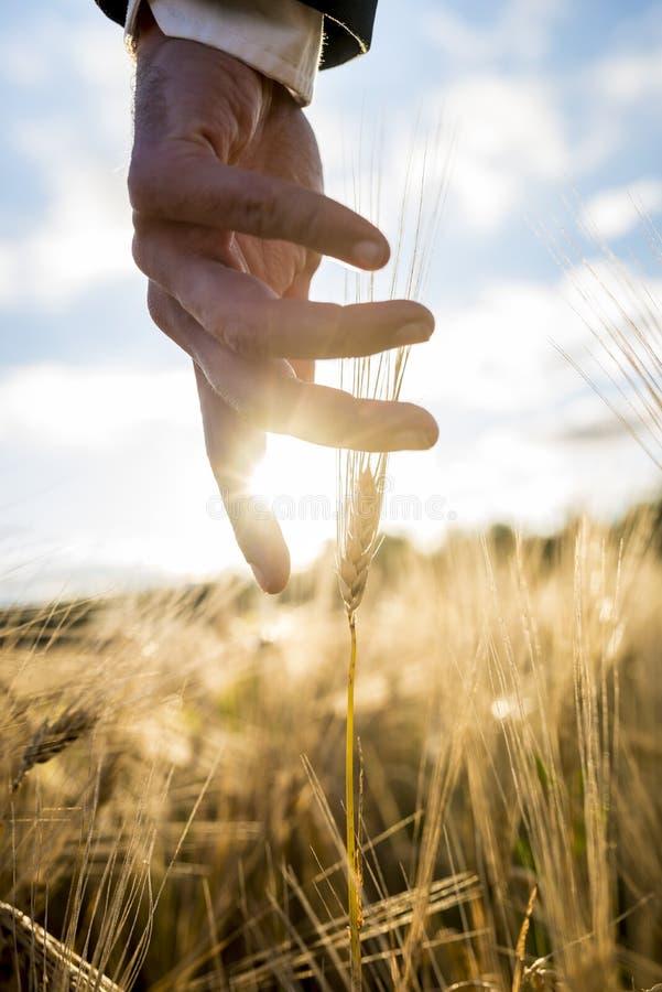 Бизнесмен или специалист по охране окружающей среды достигая вниз с его gent руки стоковые изображения
