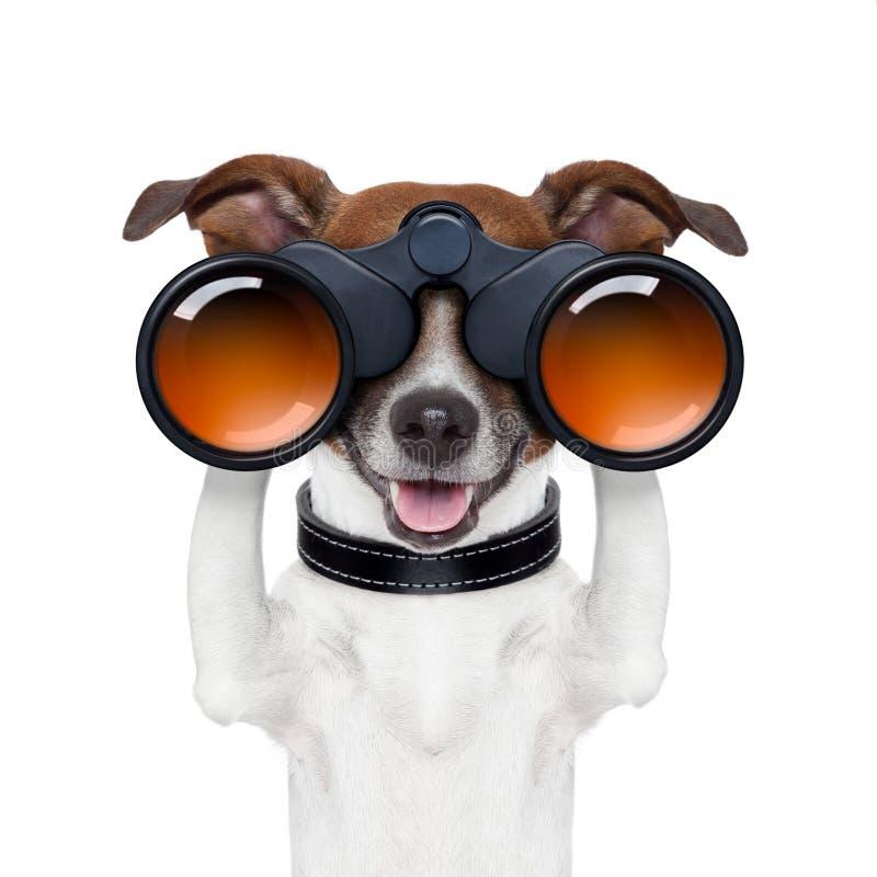 Бинокли ища смотреть наблюдающ собакой стоковые фотографии rf