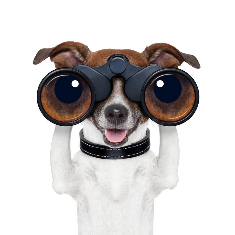 Бинокли ища смотреть наблюдающ собакой стоковое фото rf