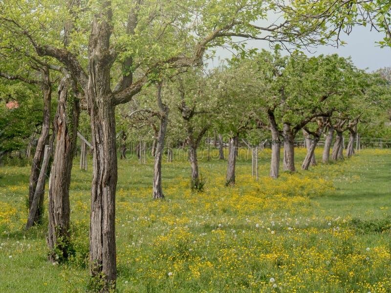 Биологический сад в Германии - Баварии стоковое изображение rf