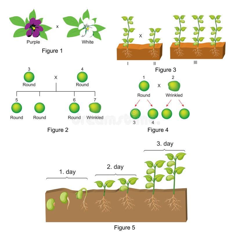 Биология - шаблон вопроса и ответа бесплатная иллюстрация