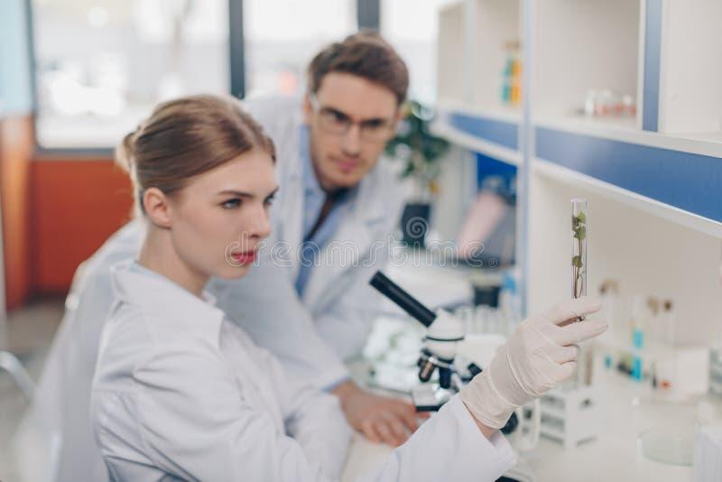 Биологи с заводом в трубке стоковые изображения