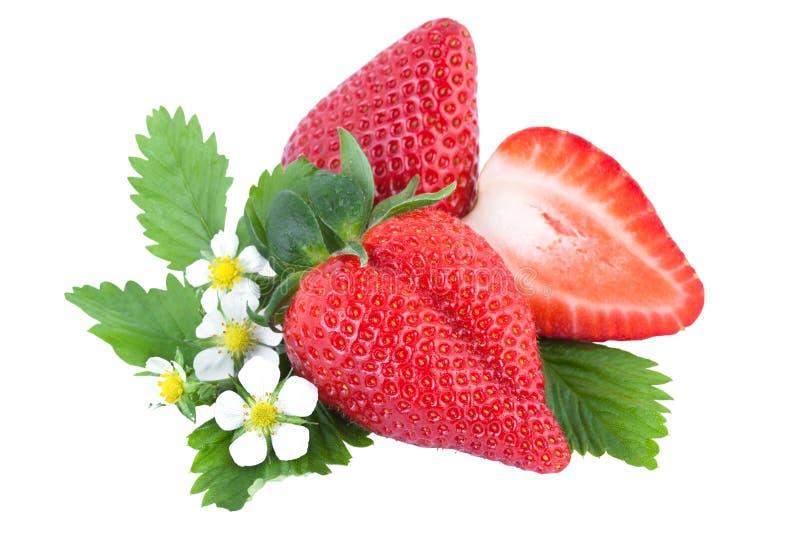 Био Strawbery с зелеными лист и цветком стоковое фото