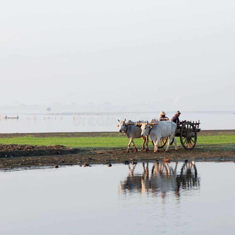Бирманские фермеры стоковые фото