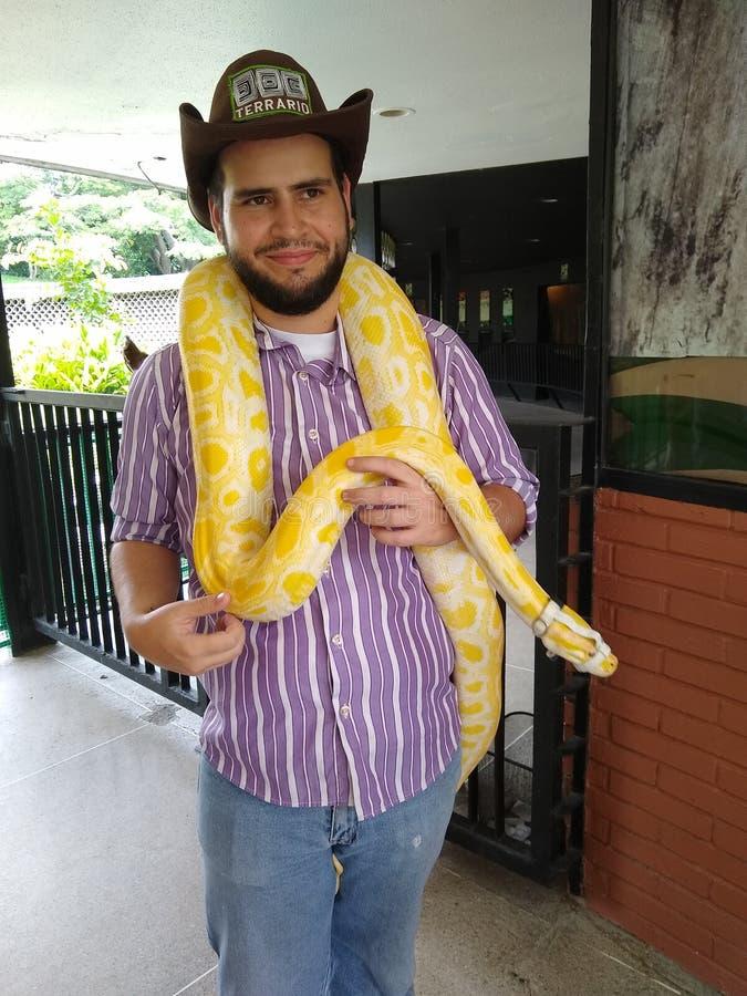 Бирманский питон питон бивиттат змея в рептилии шоу стоковая фотография
