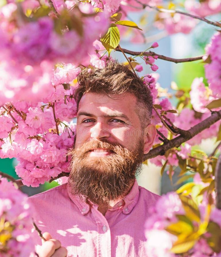 Битник в розовой рубашке около ветви Сакуры Человек с бородой и усик на усмехаясь стороне около цветков Бородатый человек с стоковое изображение rf