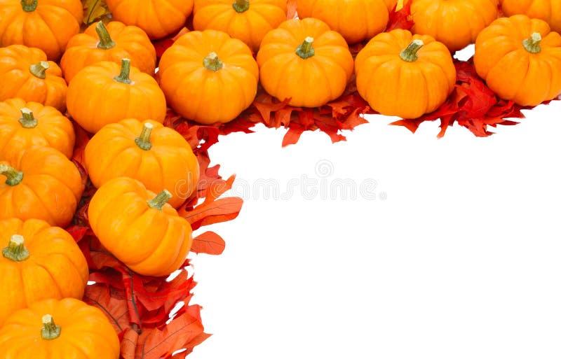 благодарение падения украшения изолированное halloween стоковые фото