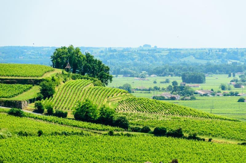 Благоустраивайте взгляд виноградников около Святого-Emilion, Франции стоковые фотографии rf