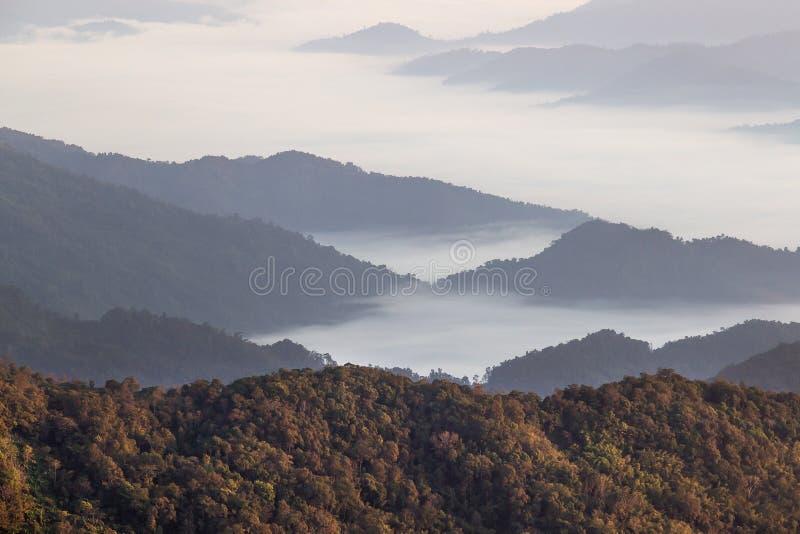 Благоустраивайте море тумана над лесом и горой стоковое фото rf