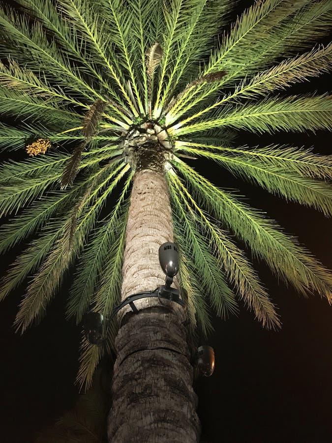 Благоустраивать освещение ночи на пальме стоковые фотографии rf