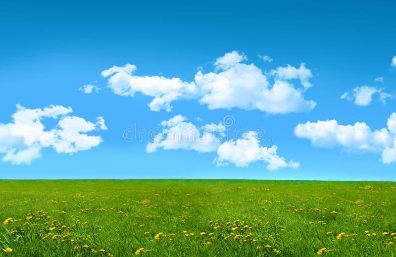 блаженное лето травы поля дня стоковое изображение rf