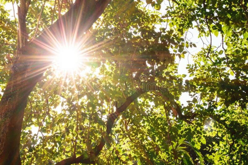 Блески Солнця через листья стоковые изображения