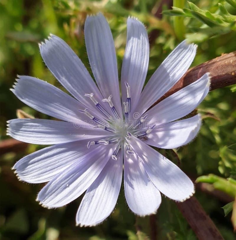 Блеск полевых цветков стоковое фото