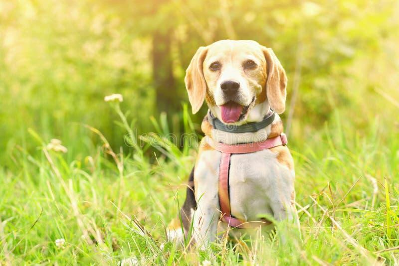 блестящий Красивая съемка собаки в траве стоковое изображение rf