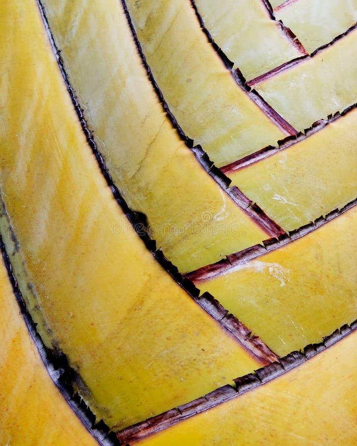 близкая весьма пальма fronds вверх стоковое фото rf
