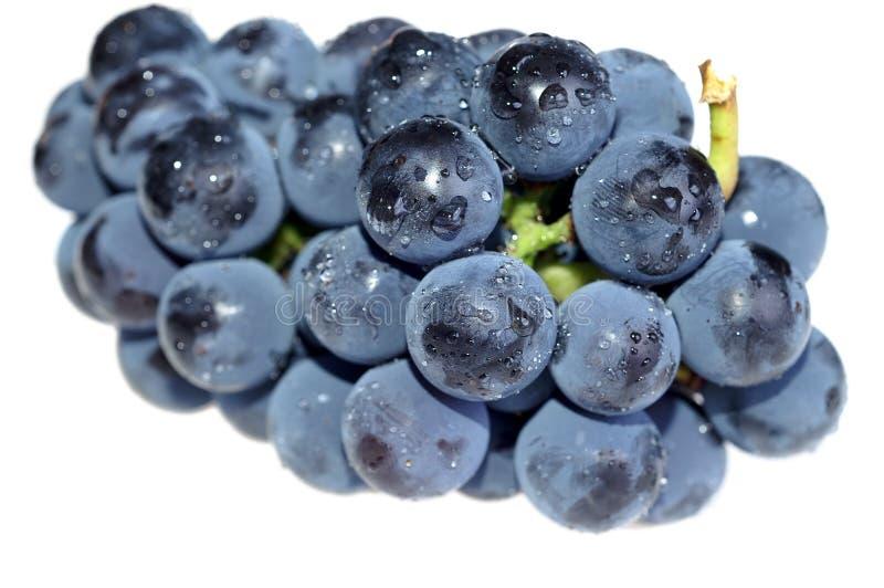 близкая виноградина вверх стоковая фотография