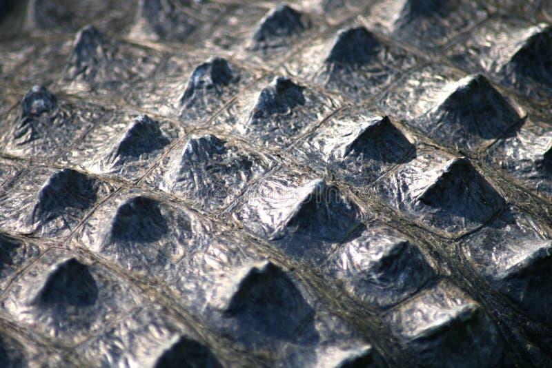 близкая крокодиловая кожа вверх стоковое изображение