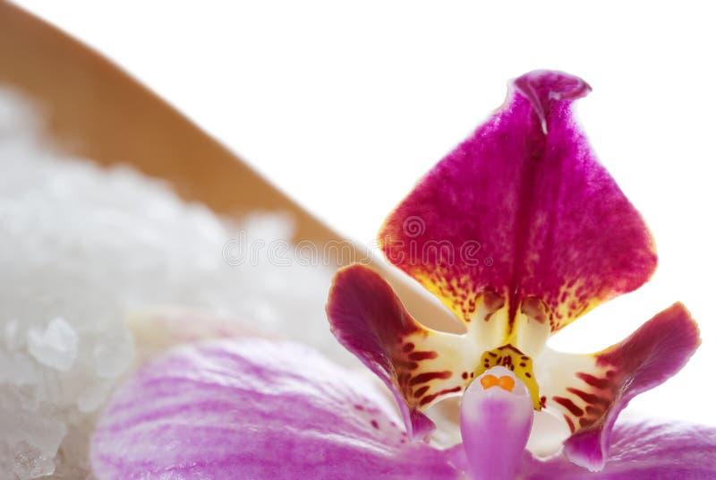 близкая орхидея вверх стоковые изображения