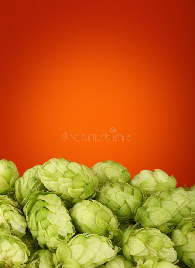 Близкая поднимающая вверх куча свежих зеленых хмелей с космосом экземпляра стоковые изображения rf