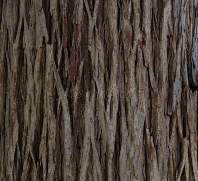 Близкая поднимающая вверх съемка естественной коры дерева стоковое фото
