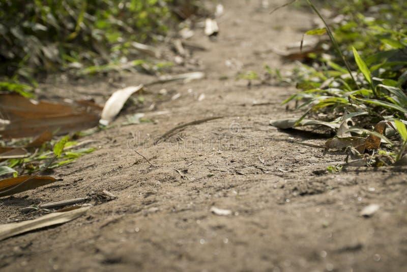 Близкая поднимающая вверх тропа грязи в лесе и листьях стоковые фотографии rf