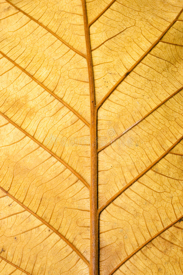 близкая сухая текстура структуры листьев grunge вверх стоковая фотография