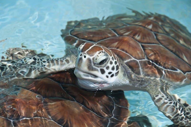 близкая черепаха моря стоковые фотографии rf