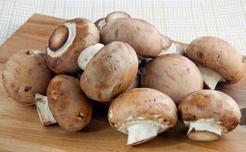 близкие грибы вверх стоковые фото