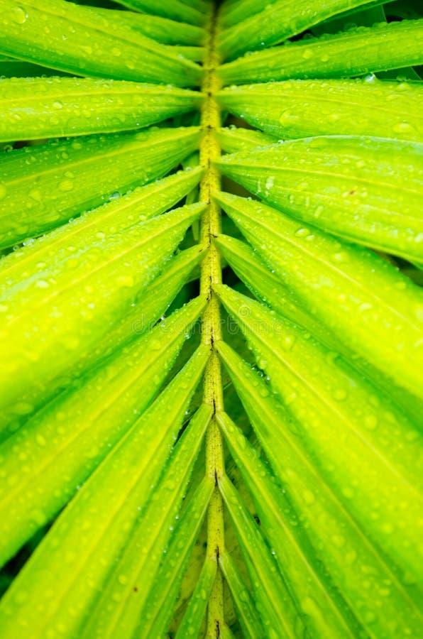 близкие капельки росы засевают вода травой утра листьев совершенная поднимающая вверх стоковое фото rf