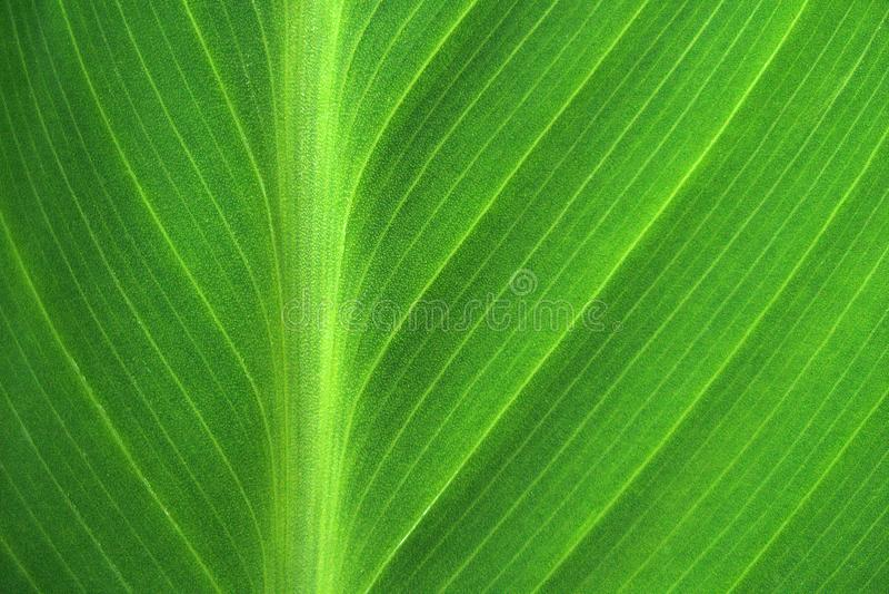 Близкие линии с зеленым листом стоковое изображение