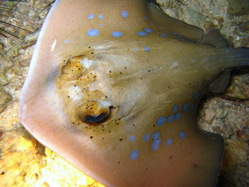 близкие рыбы излучают вверх стоковое изображение