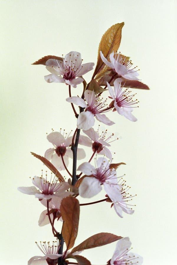 близкие цветки вверх стоковое изображение rf