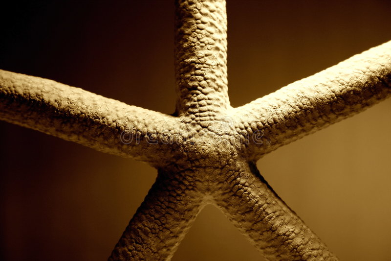 близкие starfish вверх стоковое изображение