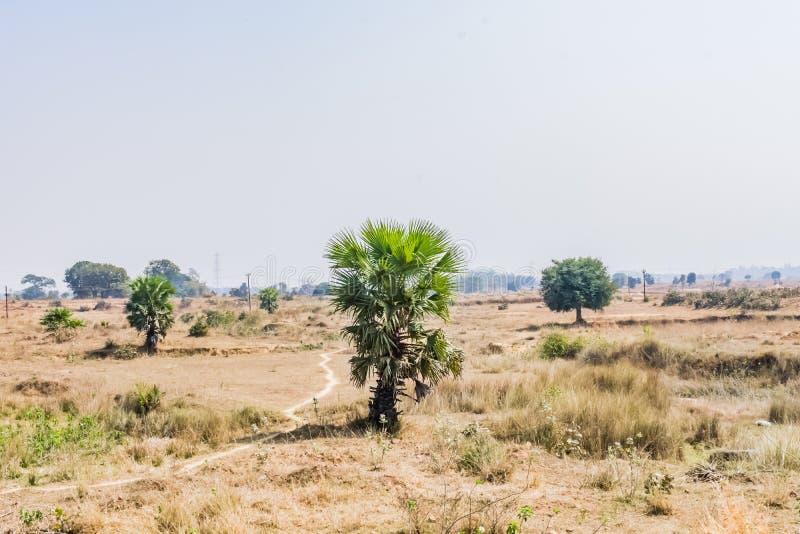 близкий взгляд малой пальмы в ферме падиа деревни стоковая фотография rf