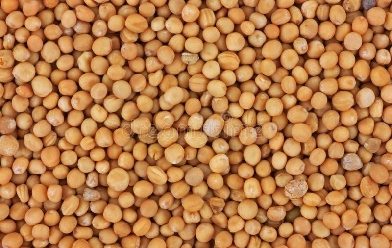 близкий взгляд семени мустарда стоковое фото