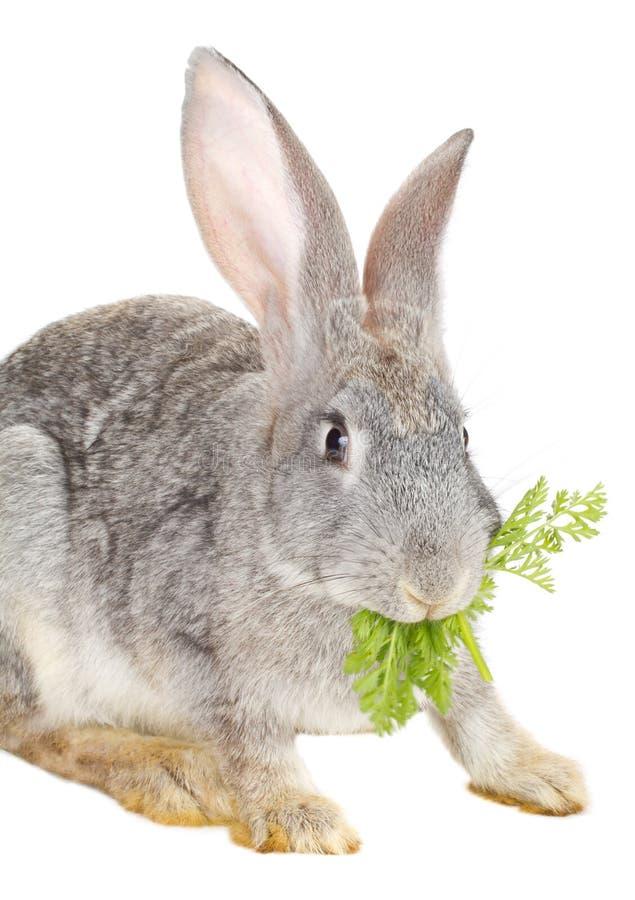 близкий кролик вверх стоковые изображения