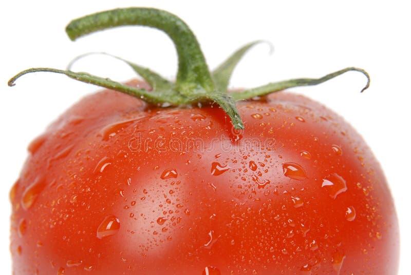 близкий одиночный томат вверх стоковые изображения
