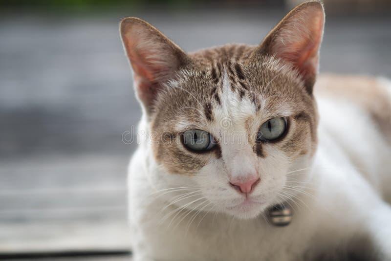 Близкий поднимающий вверх взгляд милого кота, выборочный фокус стоковые фото