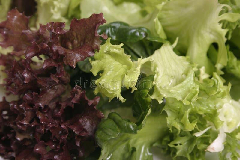 близкий салат смешанный вверх Стоковое Изображение RF