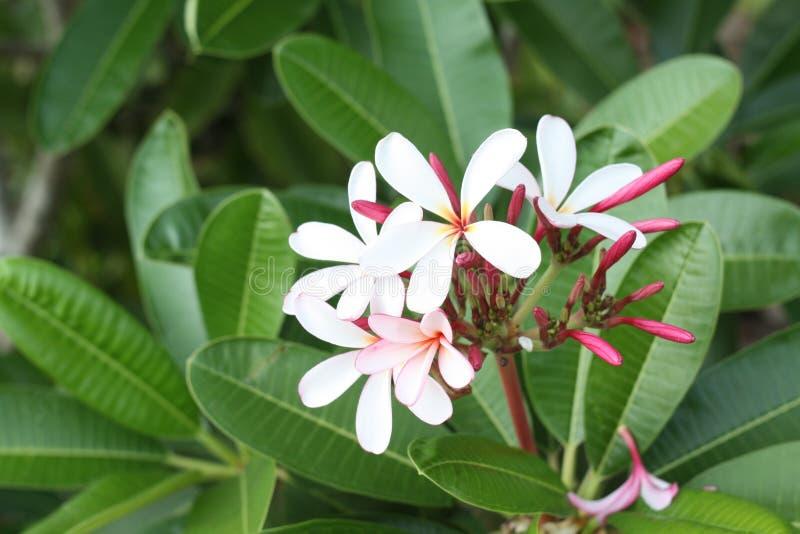 Близкое поднимающее вверх изображение цветков сногсшибательных крас стоковая фотография