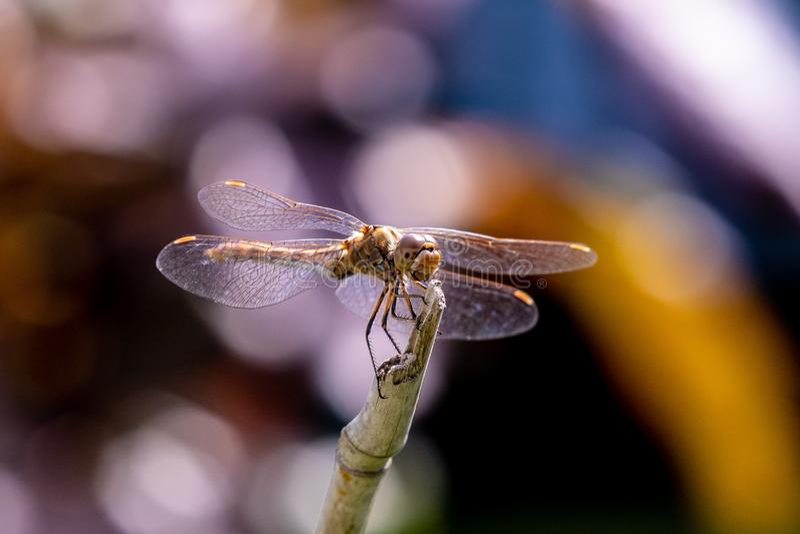 Близко 3/4 взглядов на большом dragonfly стоковое изображение rf