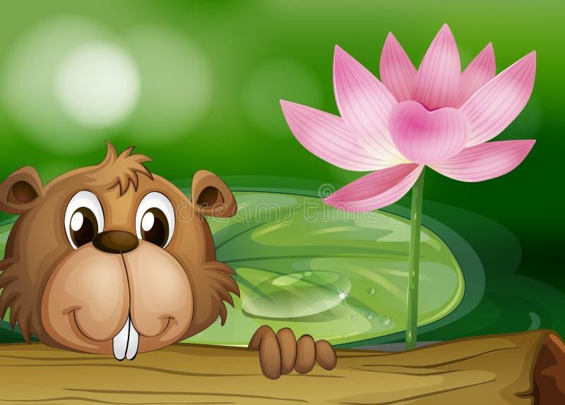 Бобр около розового цветка бесплатная иллюстрация