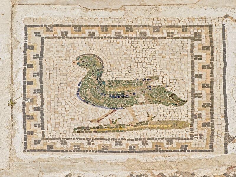 Богато украшенные старые римские плитки пола показывая птицу, деталь руин Italica, римский город в провинции Hispania Baetica стоковые фотографии rf