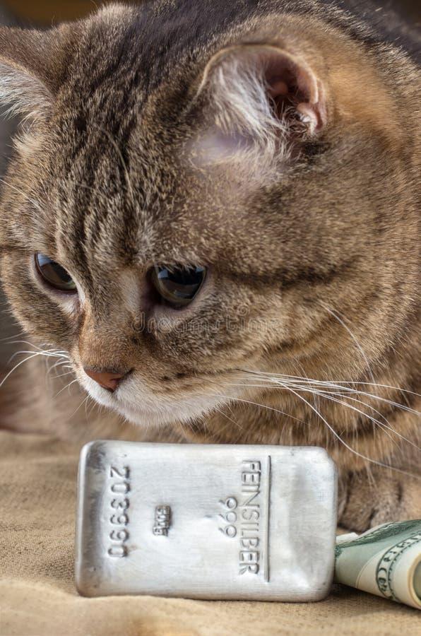 Богатый кот Голова ` s кота около серебряного долларов миллиарда и наличных денег стоковое изображение