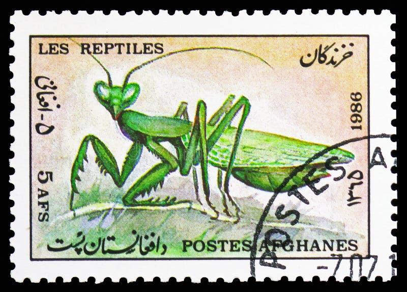 Богомол (religiosa) Mantis, serie животных, около 1986 стоковые фотографии rf