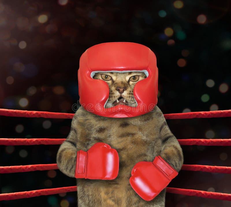 Боец кота в боксерском ринге стоковое изображение rf