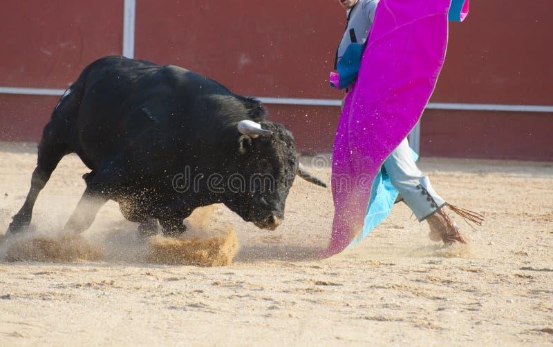 бой быка стоковые фотографии rf