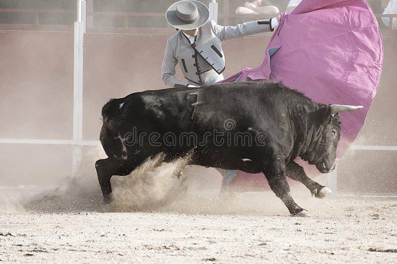 Бой быков. Воюя изображение быка от Испании. Черный бык стоковое изображение rf