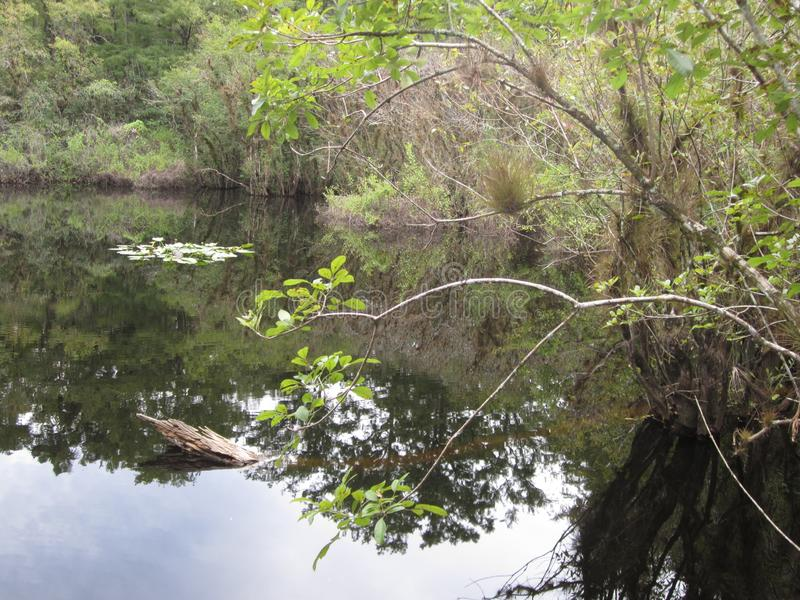 Болотистое озеро с неподвижной водой стоковое изображение